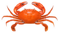 Crab Illustration Isolated On White Sticker
