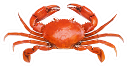 Crab Isolated Sticker