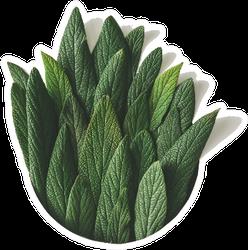 Creative Minimal Arrangement Of Green Leaves Sticker