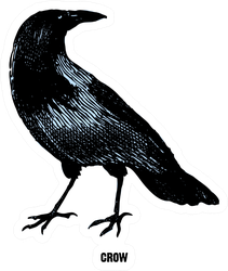"""Crow From """"the Complete Encyclopedia Of Illustrations"""" Sticker"""