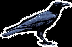 Crow, Raven, Black Bird Illustration Sticker