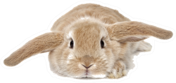 Cute Bunny Isolated On Background Sticker
