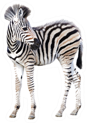 Cute Child Zebra Isolated On White Sticker