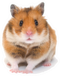 Cute Funny Syrian Hamster Sticker