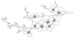 Cute Hand Drawn Isolated Sakura Branch Sticker