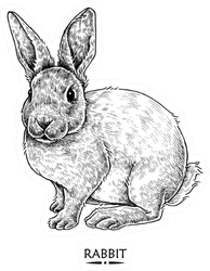 Cute Rabbit Illustration, Hand Drawn Style Sticker