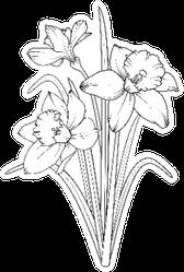 Daffodils Illustration Sketch Sticker