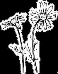 Daisy Flowers Sketch Sticker