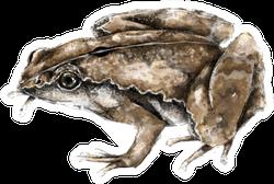 Dark-sided Chorus Frog Illustration Sticker