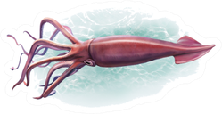 Deep-sea Squid, Realistic Drawing Sticker