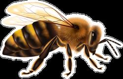 Detailed Bee Sticker