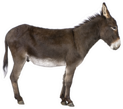 Donkey In Front Of A White Sticker
