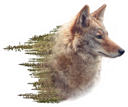 Double Exposure Of Coyote Portrait And Pine Forest Sticker
