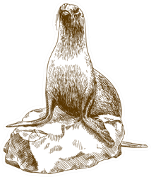 Drawing Illustration Of Female Sea Lion On Rock Sticker