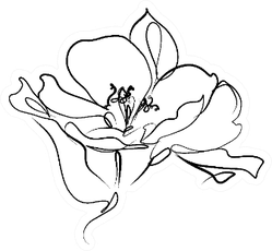 Drawing With Floral Pattern Lily Sticker