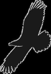 Eagle Silhouette Illustration Sticker