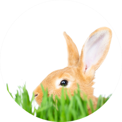 Easter Bunny In Green Grass Sticker