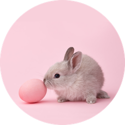 Easter Bunny Rabbit With Painted Egg On Pink Sticker