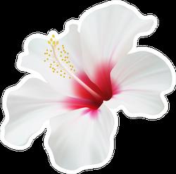 Elegant White Hibiscus Flower Sticker