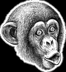 Engraved Monkey Sticker