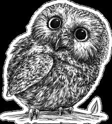 Engraved Owl With Huge Eyes Illustration Sticker