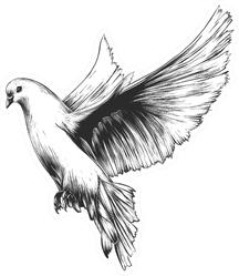 Engraved Style Illustration Of Dove Sticker