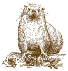 Engraving Drawing Illustration Of Otter Isolated Sticker