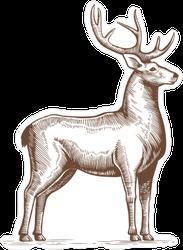 Engraving Style Deer Sticker