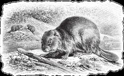 Eurasian Beaver Illustration Sketch Sticker