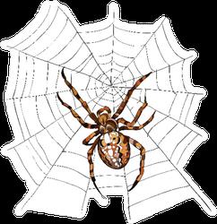 European Garden Spider Sticker