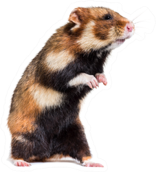 European Hamster On Hind Legs Sticker
