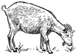 Farm Animal Goat Sketch Sticker