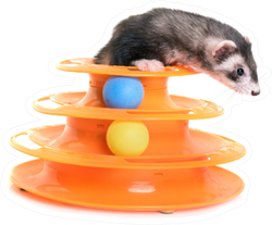Female Ferret Playing With Toy Sticker