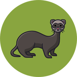 Ferret Cartoon On Green Sticker