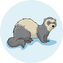 Ferret Cartoon Weasel Animal On Light Blue Background Sticker