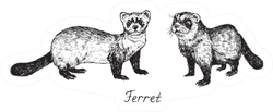 Ferret Couple, Side View, Hand Drawn Sticker