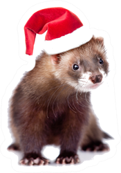 Ferret In Red Christmas Hat Looking At Camera Sticker