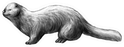 Ferret Realistic Sketch Creation Sticker