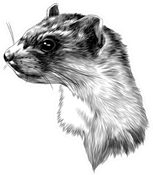 Ferret Sketch Head Monochrome Pattern Sticker