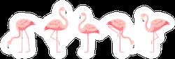 Flamingo Set Sticker