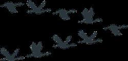 Flock Of Cranes Or Stork Black Silhouette In Flying Sticker