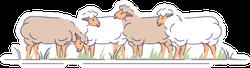 Flock Of Sheeps On Pasture Sticker