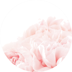 Floral Background Of Pink Carnation Flowers Sticker
