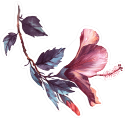 Floral Illustration of Tender Pink Hibiscus Sticker