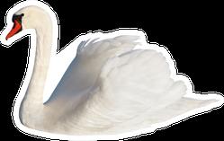 Fluffy White Swan, Isolated On White Sticker