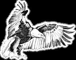 Flying Bald Eagle Charcoal Illustration Sticker