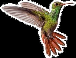 Flying Hummingbird Isolated On White Background Sticker