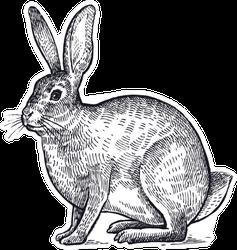 Forest Animal Hare Or Rabbit Sketch Sticker