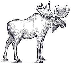Forest Animal Moose Hand Drawing Sticker