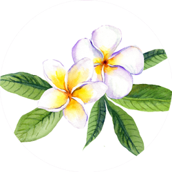 Frangipani Plumeria Flowers With Leaves Watercolor Sticker